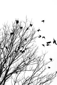 Black and white image of birds flying off a tree